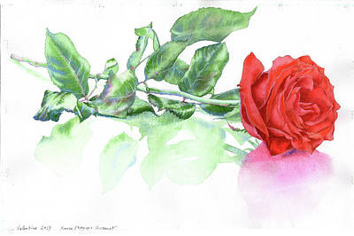 Painting - Valentine Rose by Xavier Francois