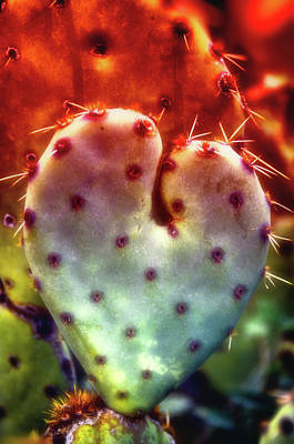 Photograph - Valentine's Day Done Arizona Style  by Saija Lehtonen