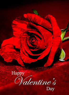 Photograph - Valentine's Day Greeting Card by Serena King