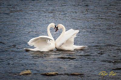 Photograph - Valentine's Swans by Rikk Flohr