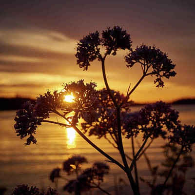 Jouko Lehto Royalty-Free and Rights-Managed Images - Valerian sunset by Jouko Lehto
