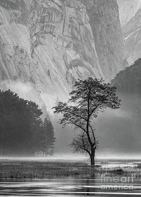 Photograph - Valley Mist by Anthony Bonafede