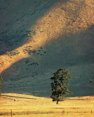 Photograph - Valley Oak by Timothy Bulone