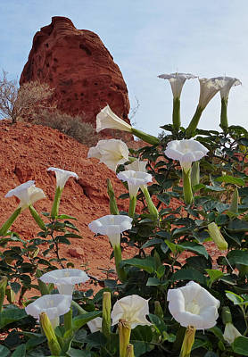 Photograph - Valley Of Fire Flowers 1 by Jeff Brunton