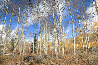 Photograph - Valley Of The Aspens by Donna Kennedy