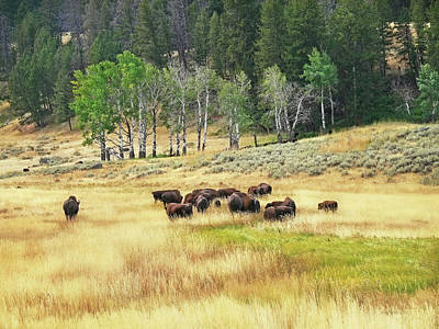 Photograph - Valley Of The Buffaloes by Jennie Marie Schell