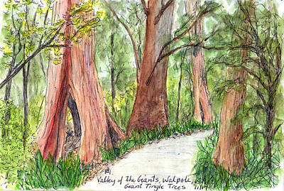 Drawing - Valley of the Giants by Anne Huth
