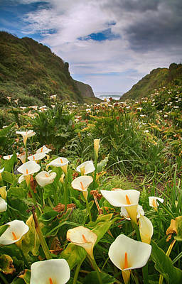California Ocean Photograph - Valley Of The Lilies by Laurie Search