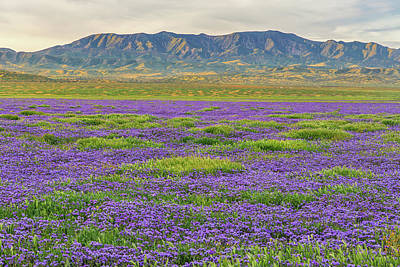 Photograph - Valley Phacelia And Caliente Range by Marc Crumpler