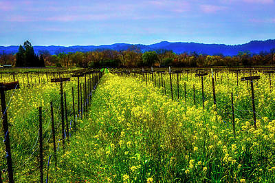 Photograph - Valley Vineyards by Garry Gay