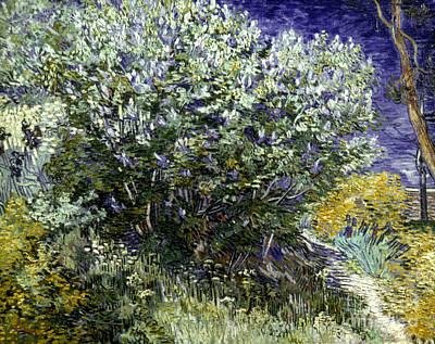 Van Gogh: Lilacs, 19th C Art Print by Granger