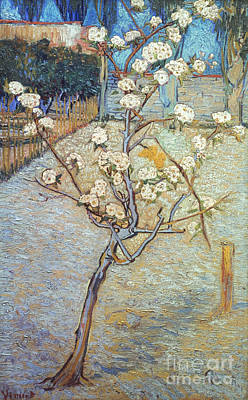 Photograph - Van Gogh: Peartree, 1888 by Granger