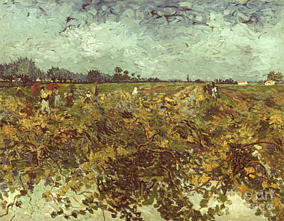 Photograph - Van Gogh: Vineyard, 1888 by Granger
