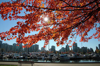 Photograph - Vancouver Autumn by Perggals - Stacey Turner