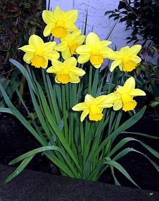 Daffodils Digital Art - Vancouver Daffodils by Will Borden