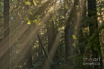 Photograph - Vancouver Island Light Beams by Adam Jewell