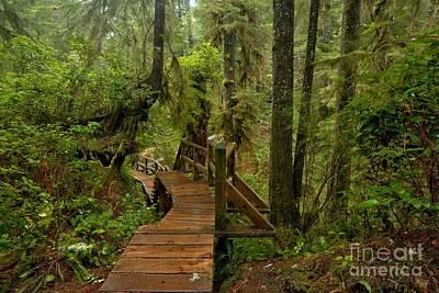 Photograph - Vancouver Island Rainforest Boardwalk by Adam Jewell