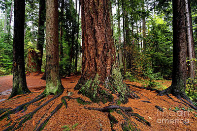 Photograph - Vancouver - Stanley Park Tree Settings 1 - 2017 by Terry Elniski