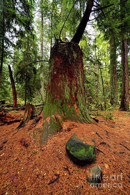 Photograph - Vancouver - Stanley Park Tree Settings 2 - 2017 by Terry Elniski