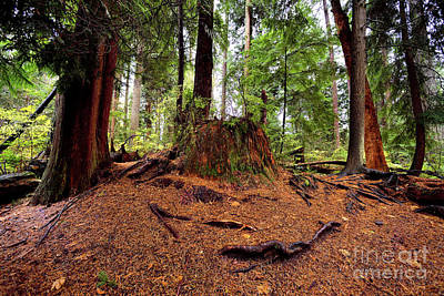 Photograph - Vancouver - Stanley Park Tree Settings 3 - 2017 by Terry Elniski