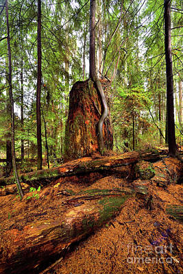 Photograph - Vancouver - Stanley Park Tree Settings 4 - 2017 by Terry Elniski
