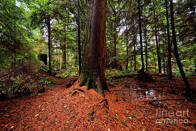 Photograph - Vancouver - Stanley Park Tree Settings 6 - 2017 by Terry Elniski