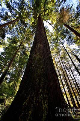 Photograph - Vancouver Stanley Park Trees 2017 - 1 by Terry Elniski
