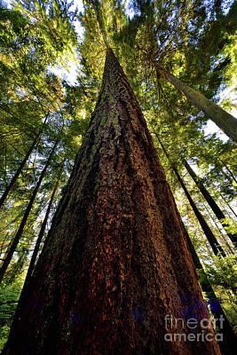 Photograph - Vancouver Stanley Park Trees 2017 - 2 by Terry Elniski