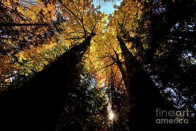Photograph - Vancouver Stanley Park Trees 2017 - 3 by Terry Elniski