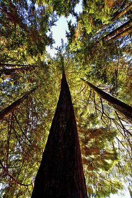 Photograph - Vancouver Stanley Park Trees 2017 - 4 by Terry Elniski