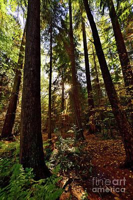 Photograph - Vancouver Stanley Park Trees 2017 - 5 by Terry Elniski