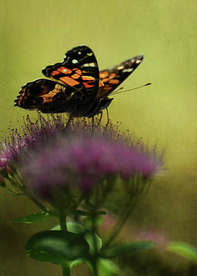 Photograph - Vanessa Virginiensis American Lady Butterfly by Rebecca Sherman