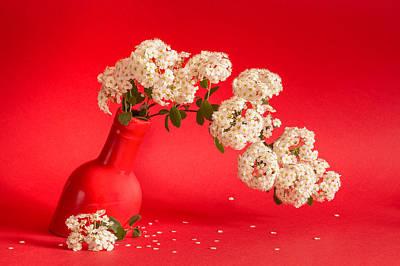 Vanhoutte Spirea Flowers In A Coral Red Vase Original