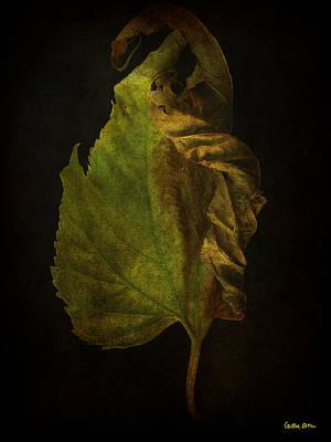 Photograph - Vanitas 4 by Cristina Ortiz