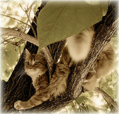 Longhair Cats Photograph - Vantage Point by ShaddowCat Arts - Sherry