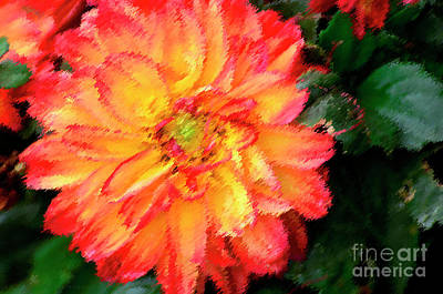 Photograph - Variegated Dahlia by Debby Pueschel