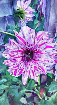 Variegated Dahlia In Oil Print by Jeffrey Canha