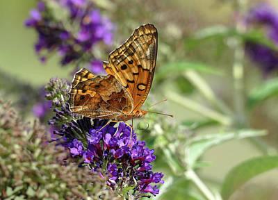 Photograph - Variegated Fritillary Butterfly by Bill Jordan