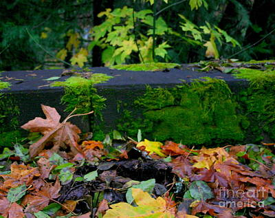 Photograph - Varigated Fall by Marie Neder