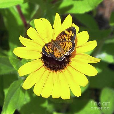 Photograph - Varigated Fritillary 4 by Lizi Beard-Ward