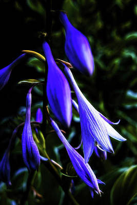 Photograph - Varigated Hosta Bloom by Robert FERD Frank