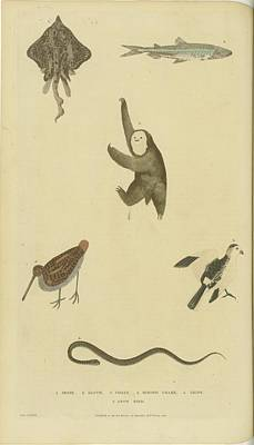 Various Birds Fish Art Print by MotionAge Designs