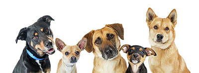 Photograph - Various Dogs Horizontal Web Banner by Susan Schmitz