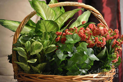 Photograph - Various Plants In A Basket by Ruth Housley