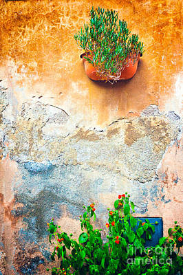 Photograph - Vase On Decayed Wall by Silvia Ganora