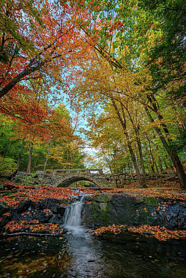 Colorful Leaves Photograph - Vaughan Brook by Rick Berk