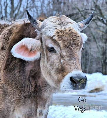 Photograph - Vegan Cow by Debbie Stahre