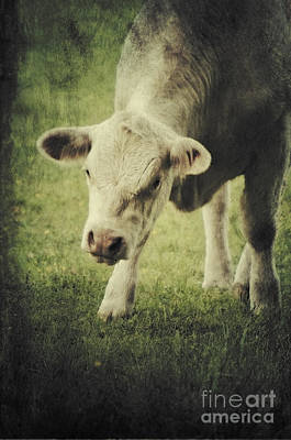 Cows Mixed Media - Cow by Angela Doelling AD DESIGN Photo and PhotoArt
