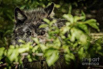Photograph - Veiled Intent by Brad Allen Fine Art