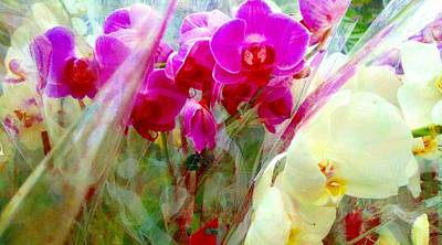 Digital Art - Veiled Orchids 2 by Marianne Dow